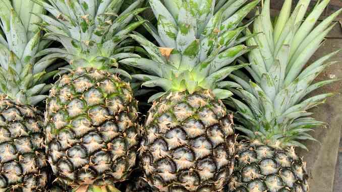Quatre ananas entiers en gros plan