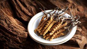 Chenilles momifiées par le champignon cordyceps sinenis en premier plan, posés devant une tasse d'infusion. Le plan de travail est en béton.