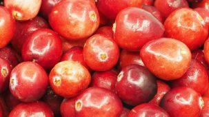 Cranberries / Canneberges rouges en gros plan