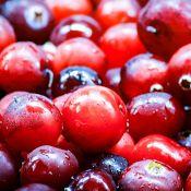 Cranberries (canneberges) en gros plan : rouge clair et rouge foncé selon les fruits
