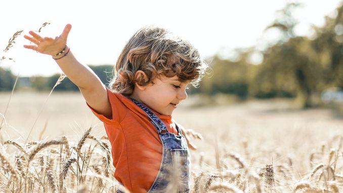 Un enfant se promène dans des champs de céréales