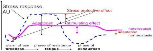 Graphique mettant en avant l'effet des adaptogènes sur le stress.