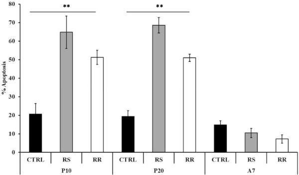 Graphique représentant le pourcentage % Apoptosis en fonction du traitement (avec ou sans rhodiola), en différenciant la rosavine et le salidroside, les deux substances actives principales de la rhodiole.