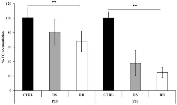Graphique représentant le taux de triglycérides en fonction du traitement : rhodiola ou sans rhodiola. Les deux principes actifs de la rhodiole sont étudiés : la rosavine et le salidroside (RR et RS dans le graphique en barres).