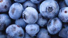 Myrtilles en gros plan. Elles sont bleues avec une fine pellicule sur leur peau qui les rend mates. Le ptérostilbène est extrait de leur peau.