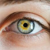 Œil vu de près. L'iris est bleu clair sur les cotés et jaune à l'intérieur.